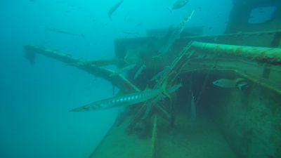 barracudas faroud 400x225